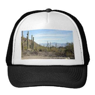 Sonoran desert scene 02 cap