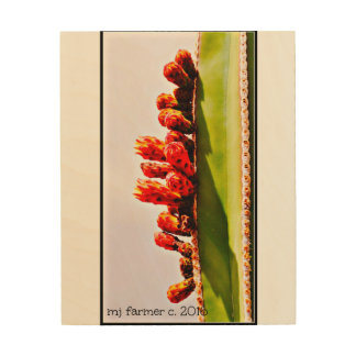 Sonoran Stove Pipe Cactus in Bloom Wood Prints