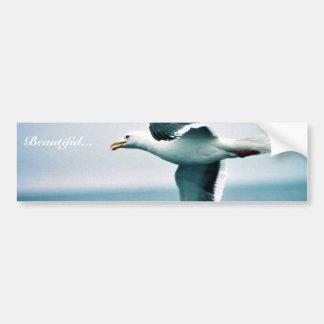 Sooty-backed or Western Gull Car Bumper Sticker