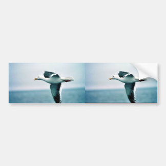 Sooty-backed or Western Gull Bumper Stickers