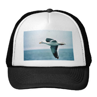 Sooty-backed or Western Gull Hats