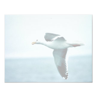 Sooty-backed or Western Gull Invites