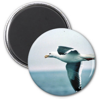 Sooty-backed or Western Gull Refrigerator Magnets