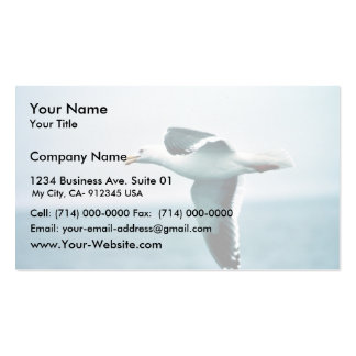 Sooty-backed or Western Gull Pack Of Standard Business Cards