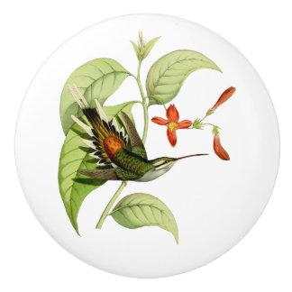 Sooty Capped Hermit Hummingbird Ceramic Knob
