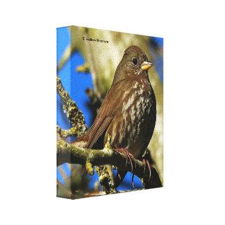 Sooty Fox Sparrow in a Pear Tree Canvas Print