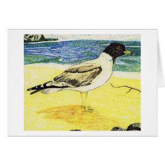 Sooty Gull Greeting Card