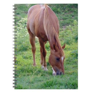 Sorrel Gelding Notebook
