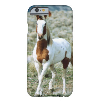 Sorrel Tovero Paint Horse Barely There iPhone 6 Case