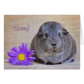 Sorry Guinea Pig Card Gerbera Daisy