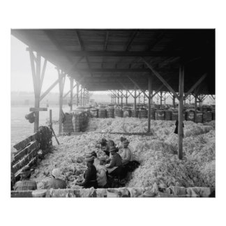 Sorting Cotton-Large Format Black and White Photograph