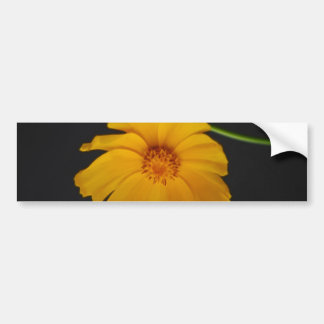 Soulful Coreopsis flower and meaning Bumper Sticker