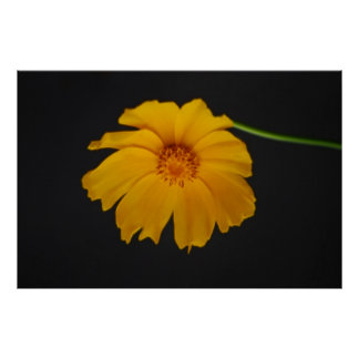 Soulful Coreopsis flower and meaning Poster