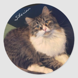 Soulful Siberian Cat Stickers