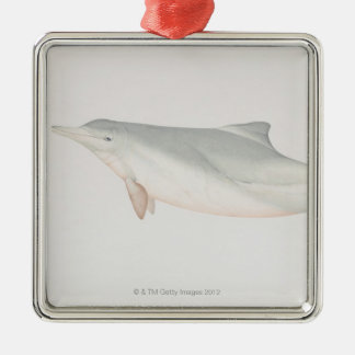 Sousa chinensis, Indo-Pacific Humpback Dolphin, Christmas Ornament
