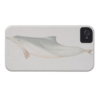 Sousa chinensis, Indo-Pacific Humpback Dolphin, iPhone 4 Case-Mate Case