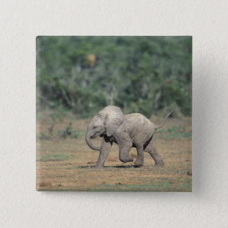 South Africa, Addo Elephant Nat'l Park. Baby 15 Cm Square Badge