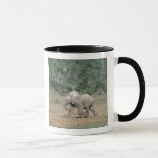South Africa, Addo Elephant Nat'l Park. Baby Mug
