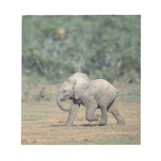South Africa, Addo Elephant Nat'l Park. Baby Notepads