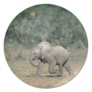South Africa, Addo Elephant Nat'l Park. Baby Plate