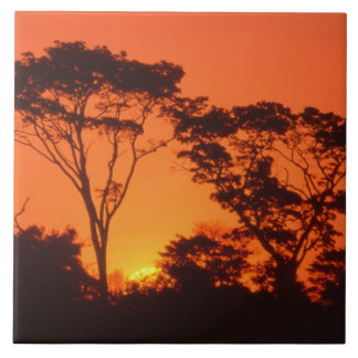 South Africa.  African sunset. Tile