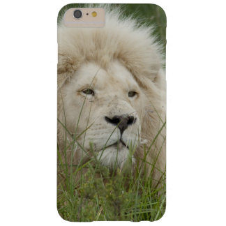 South Africa, East London, Inkwenkwezi Private Barely There iPhone 6 Plus Case