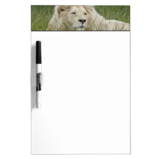 South Africa, East London, Inkwenkwezi Private Dry Erase White Board