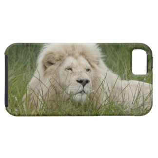 South Africa, East London, Inkwenkwezi Private Tough iPhone 5 Case