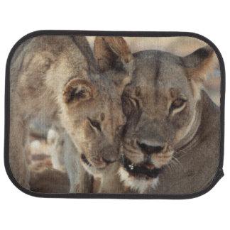 South Africa, Kalahari Gemsbok National Park 1 Car Mat