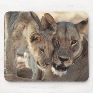 South Africa, Kalahari Gemsbok National Park 1 Mouse Mat