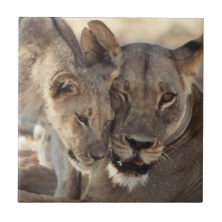 South Africa, Kalahari Gemsbok National Park 1 Tile