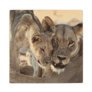 South Africa, Kalahari Gemsbok National Park 1 Wood Coaster