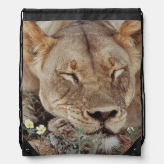 South Africa, Kalahari Gemsbok National Park 2 Drawstring Bag