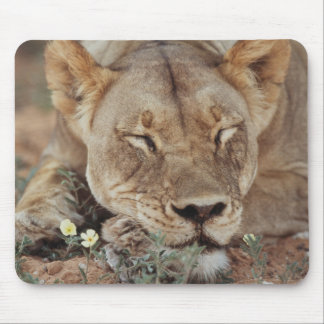South Africa, Kalahari Gemsbok National Park 2 Mouse Mat