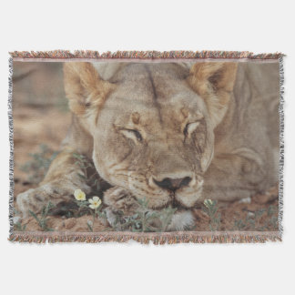 South Africa, Kalahari Gemsbok National Park 2 Throw Blanket