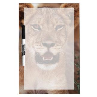 South Africa, Kalahari Gemsbok National Park 3 Dry Erase Board