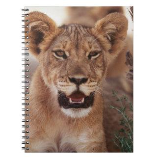 South Africa, Kalahari Gemsbok National Park 3 Notebook