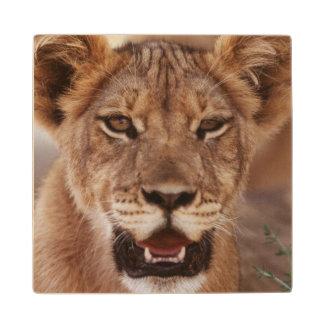 South Africa, Kalahari Gemsbok National Park 3 Wood Coaster