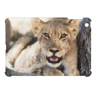 South Africa, Kalahari Gemsbok National Park 4 Case For The iPad Mini