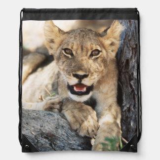 South Africa, Kalahari Gemsbok National Park 4 Drawstring Bags