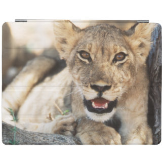 South Africa, Kalahari Gemsbok National Park 4 iPad Cover