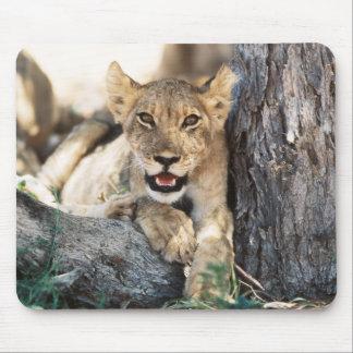 South Africa, Kalahari Gemsbok National Park 4 Mouse Mat