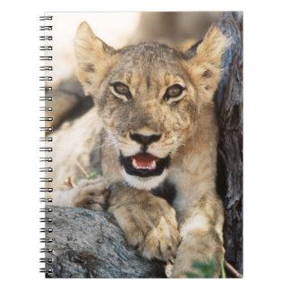 South Africa, Kalahari Gemsbok National Park 4 Notebook