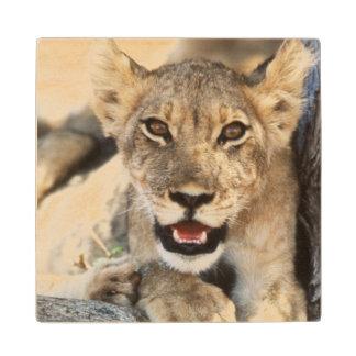 South Africa, Kalahari Gemsbok National Park 4 Wood Coaster
