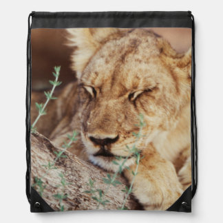 South Africa, Kalahari Gemsbok National Park 5 Drawstring Bag