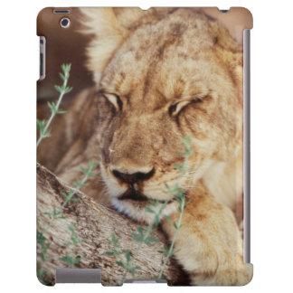 South Africa, Kalahari Gemsbok National Park 5 iPad Case