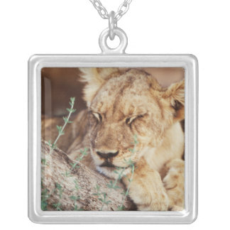 South Africa, Kalahari Gemsbok National Park 5 Silver Plated Necklace