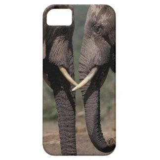 South Africa, Kalahari-Gemsbok NP, Gemsbok at Barely There iPhone 5 Case