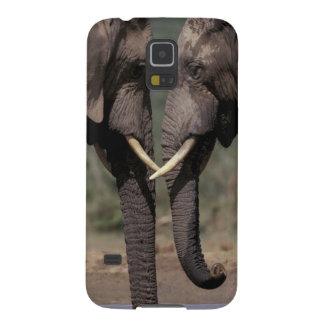 South Africa, Kalahari-Gemsbok NP, Gemsbok at Galaxy S5 Case