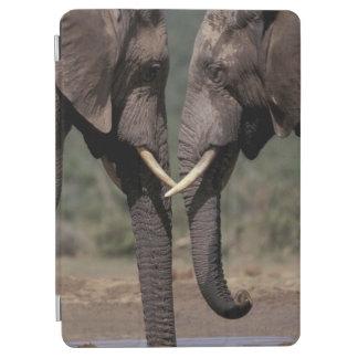 South Africa, Kalahari-Gemsbok NP, Gemsbok at iPad Air Cover